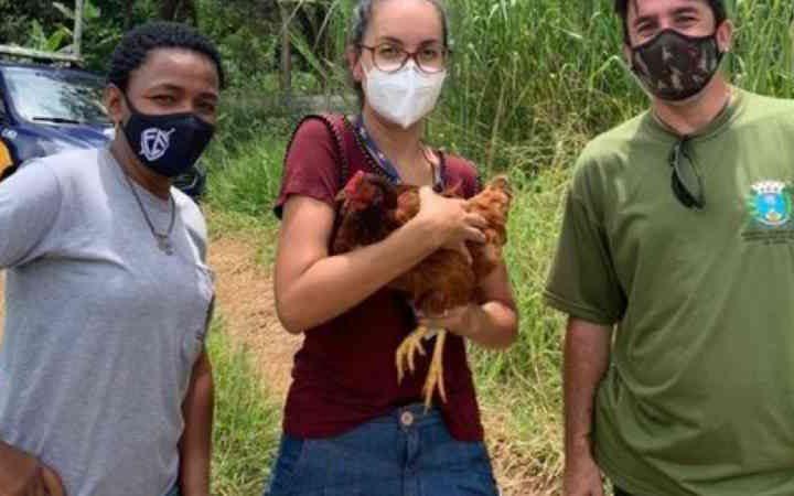 Bem-Estar Animal Araraquara (SP) resgata animais de área invadida