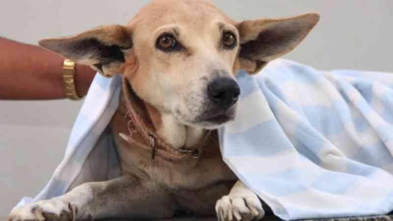 Combate ao abandono de animais em imóveis é alvo da comissão da OAB em Araraquara, SP