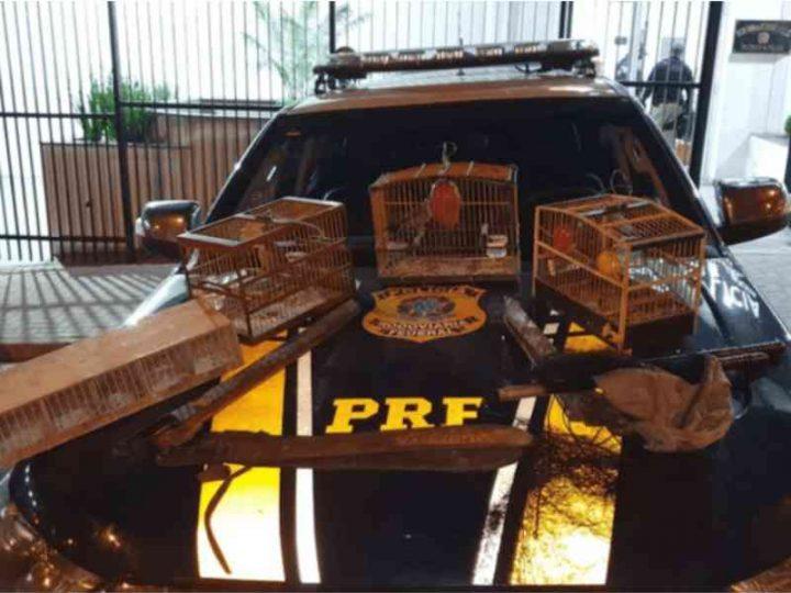 Três homens com pássaros são detidos pela PRF na rodovia Fernão Dias