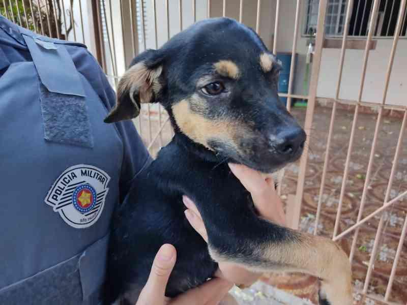Idoso é preso suspeito de esfregar pimenta no focinho de cão em Bauru, SP