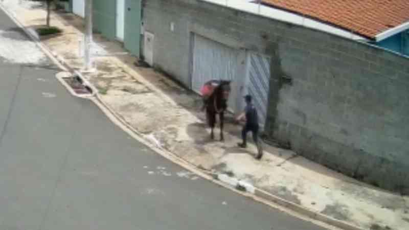 Câmera flagra homem agredindo cavalo com socos e chutes em Campinas, SP