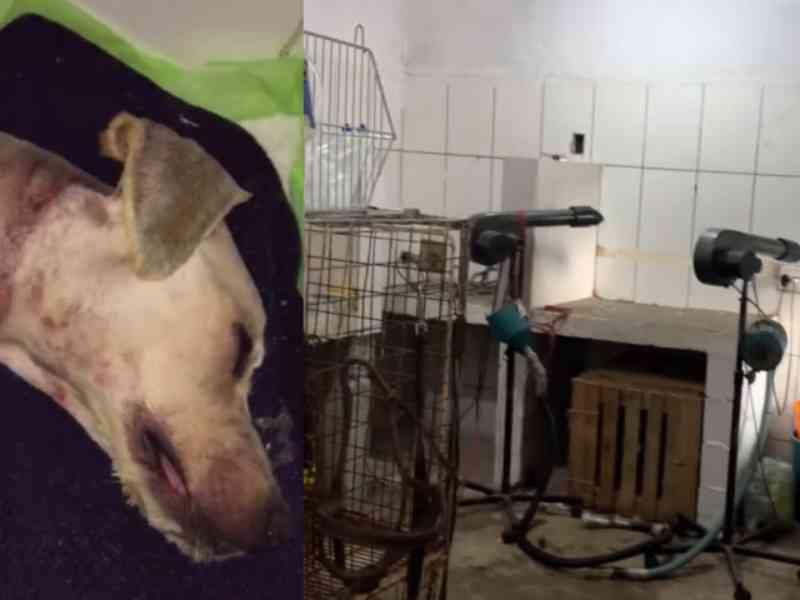 Cãozinho é levado para banho e tosa e morre por maus-tratos em pet shop em Carapicuíba, SP
