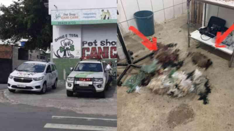 'Pet shop dos horrores' em Carapicuíba (SP): fiscais encontram animais mortos em estado de decomposição