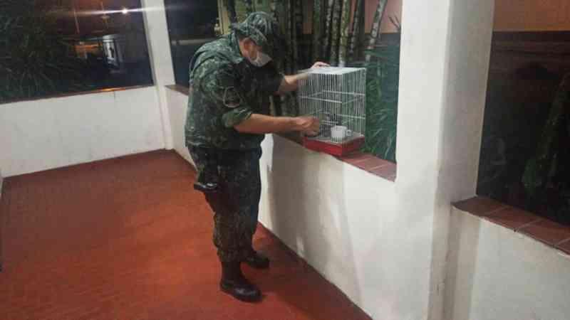 PM Ambiental apreende sagui-de-tufo-branco mantido em cativeiro em Cubatão, SP