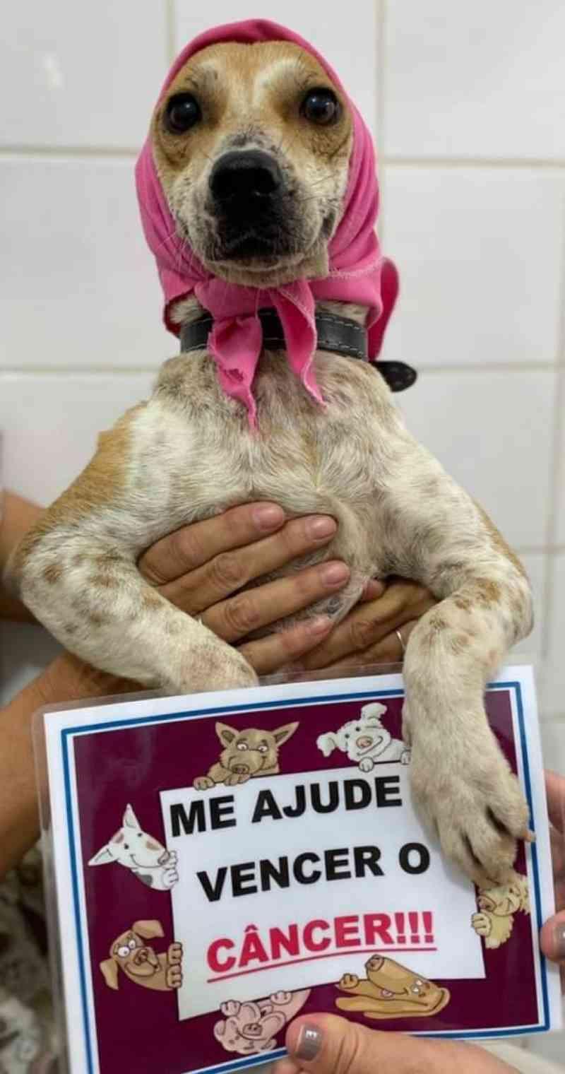Cadela resgatada das ruas luta contra um câncer em Guarujá, SP