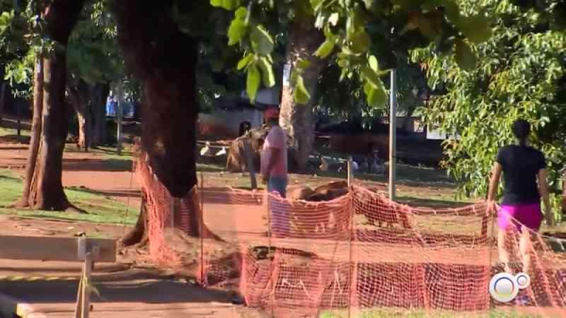 Prefeitura de inicia transferência de capivaras para área cercada no Lago Municipal de Ipaussu, SP