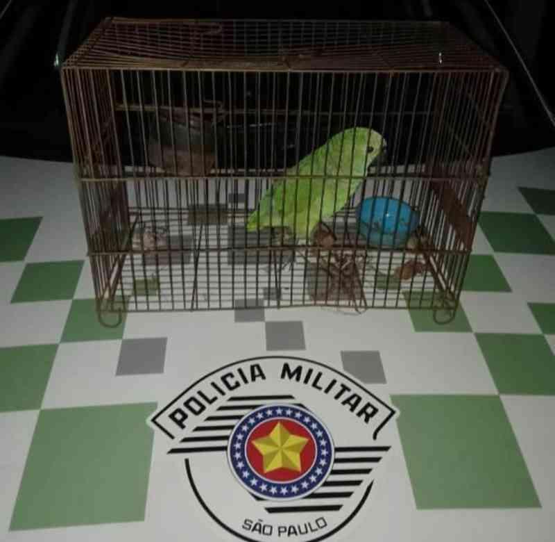 Mulher é autuada em R$ 3,5 mil pela Polícia Ambiental por maus-tratos e transporte de papagaio