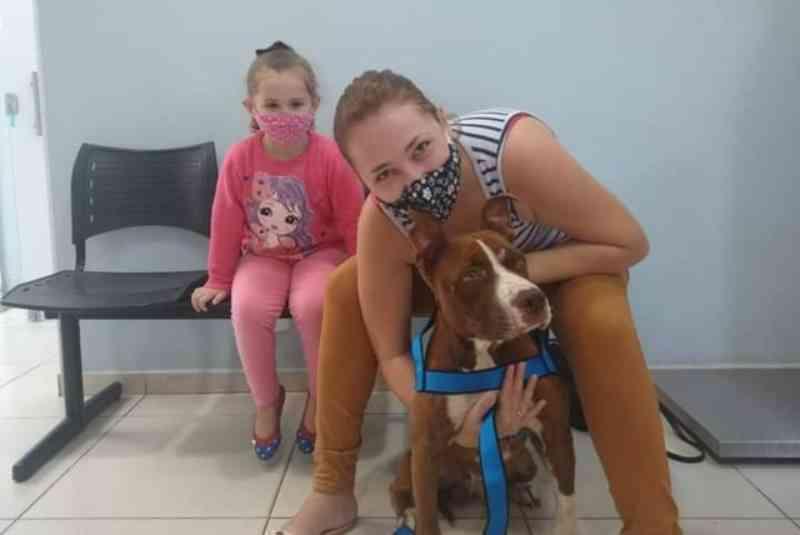 Cão resgatado após maus-tratos é adotado por família em Itapetininga, SP: 'Amor à primeira vista', diz tutora