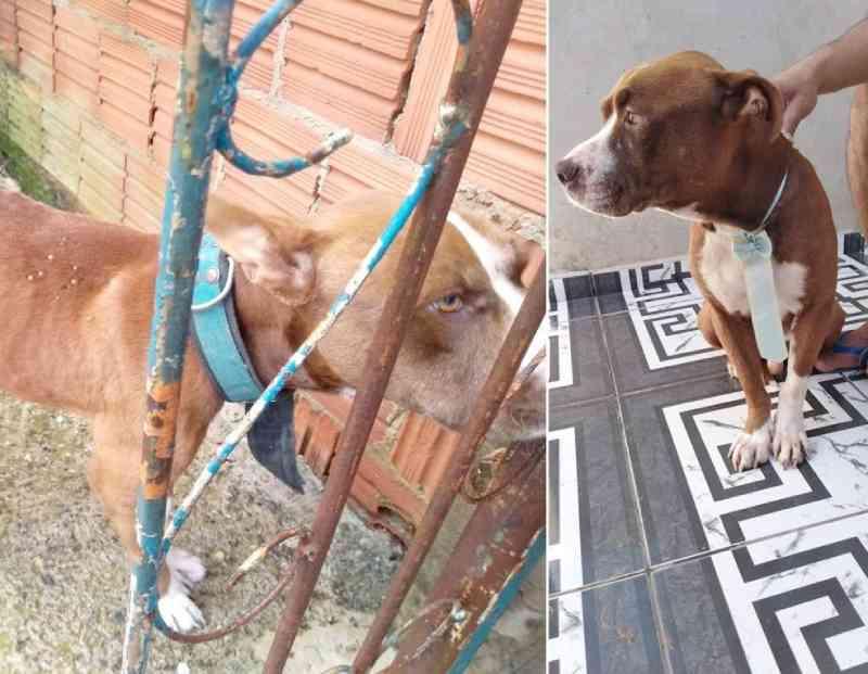 Morre cachorro que foi resgatado por ONG com sinais de maus-tratos e adotado por família