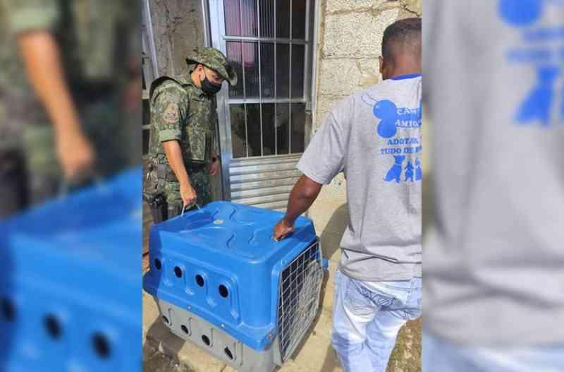 Itapevi (SP) resgata cão vítima de maus-tratos e tutora é multada em R$ 3 mil