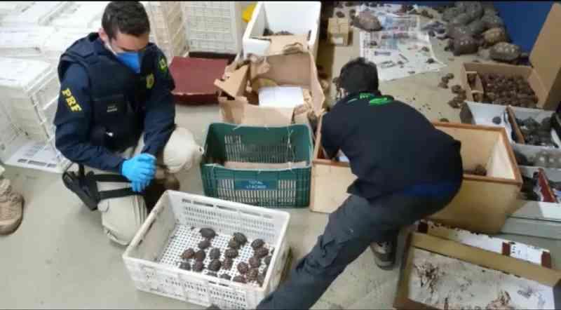 Mais de mil animais silvestres são resgatados de ônibus e levados para associação em Jundiaí, SP