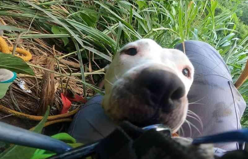 Bombeiro acalma cachorra durante resgate em vale com 60 metros de profundidade; veja vídeo