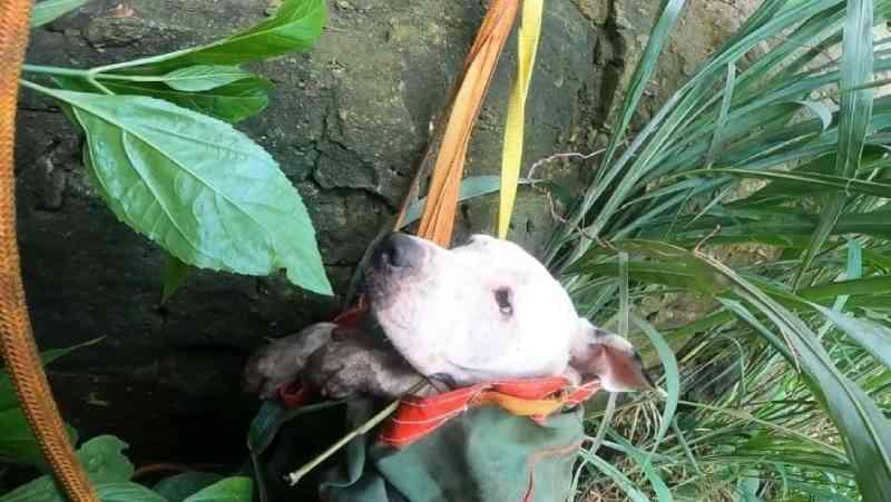 Após 13 dias, cachorra que caiu em vale de 60 metros é resgatada em Marília, SP