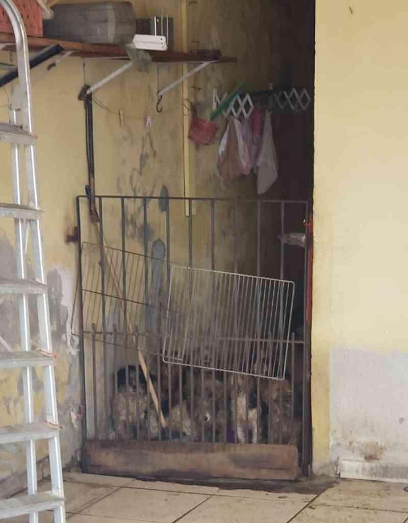 Mais de 30 cachorros ficam abandonados após tutores idosos morrerem de Covid-19 em Mogi das Cruzes, SP