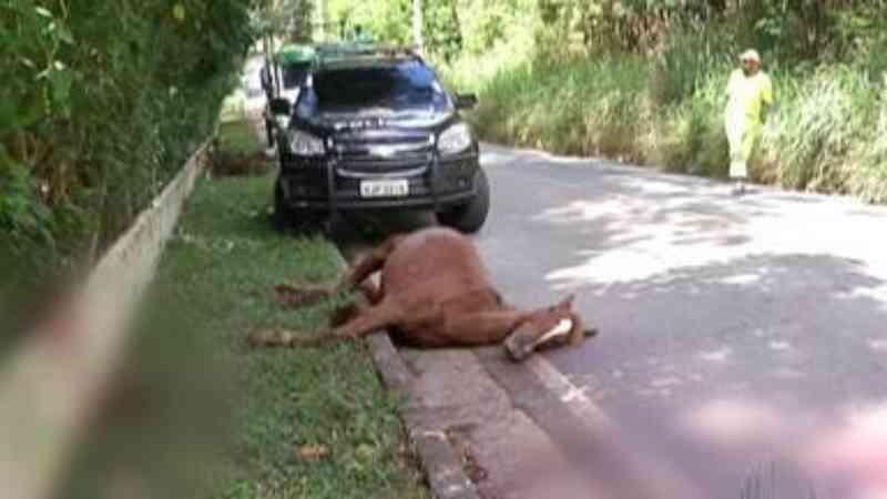 Homem é preso depois de matar cavalo com lança caseira em Mogi das Cruzes (SP), diz polícia