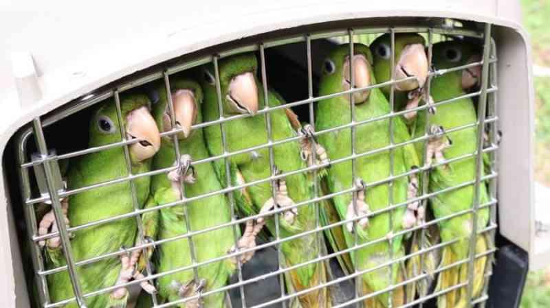 Animais apreendidos pela PM Ambiental são devolvidos à natureza em Pindamonhangaba, SP
