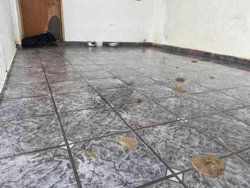 Cachorros são resgatados sem comida e em local sujo em Piracicaba, SP; dona de agropecuária é detida suspeita de maus-tratos