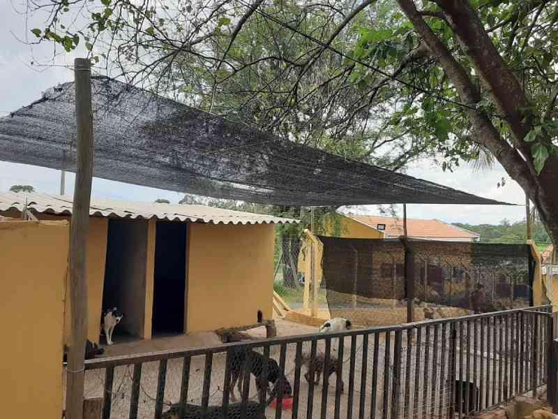 Parceria entre Prefeitura e associação de proteção de animais abandonados chega ao fim em Pirapozinho, SP