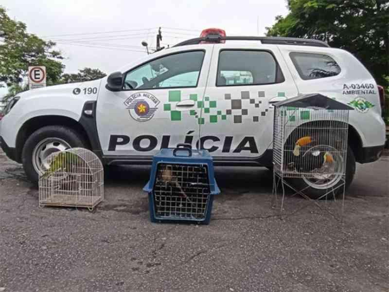 Mulher é detida pela Polícia Ambiental transportando animais silvestres na via Dutra, em Roseira, SP
