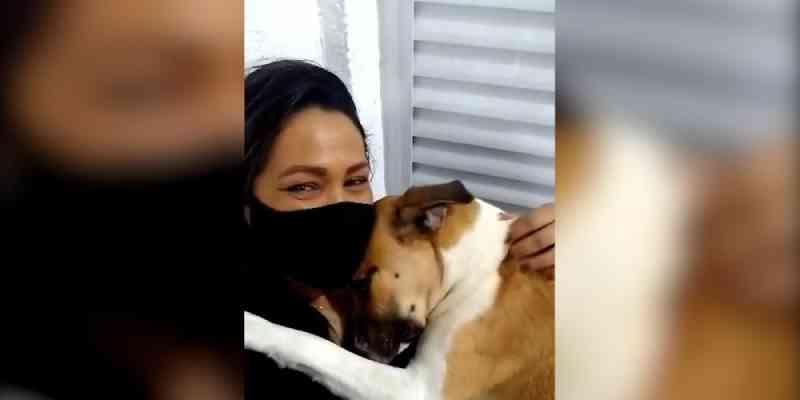 Vídeo: cachorro que teve rabo decepado vive feliz após ser resgatado, em São Vicente, SP