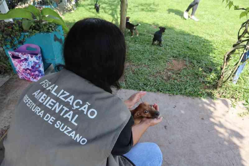 Mulher é detida após espancar cachorro no Jardim Suzanópolis, em Suzano, SP