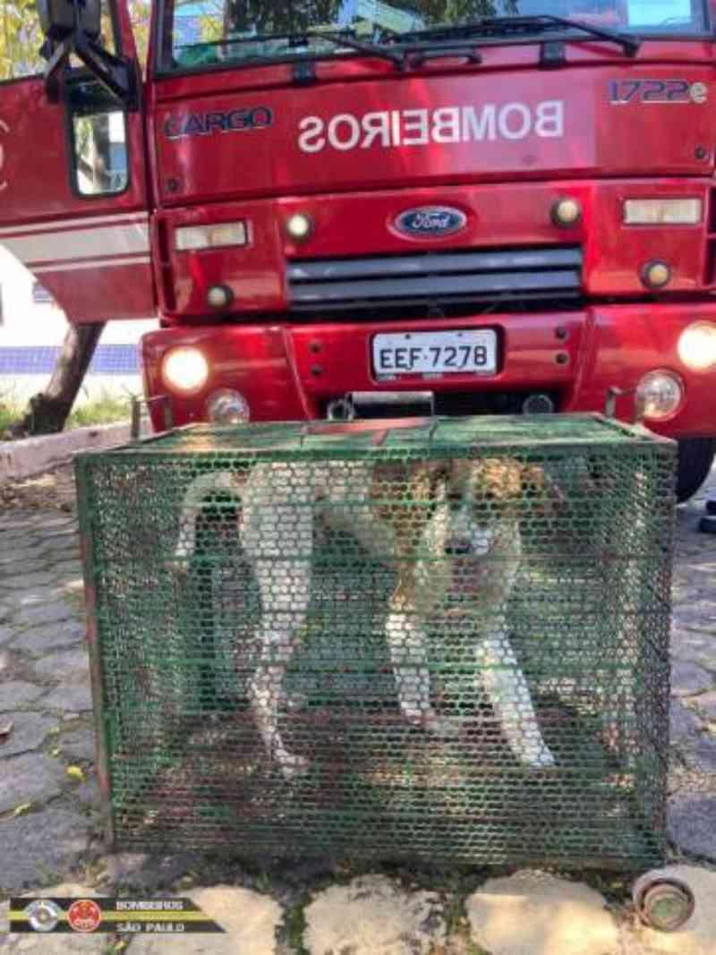 Cachorro é jogado de viaduto e resgatado pelo Corpo de Bombeiros em Taubaté, SP