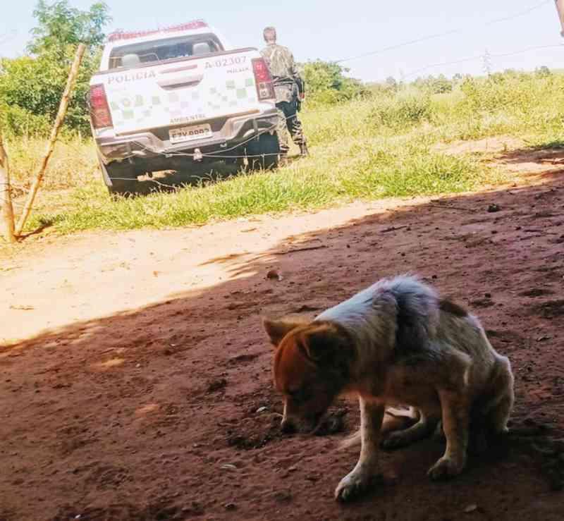 Assentada leva multa de R$ 24 mil por maus-tratos a cães em propriedade rural em Teodoro Sampaio, SP