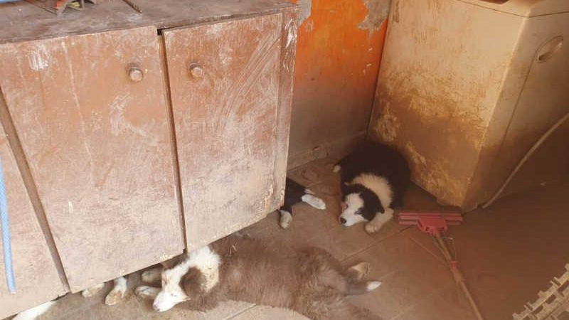 Polícia Ambiental resgata 29 cães de canil clandestino em Atibaia — Foto: Divulgação / Polícia Ambiental