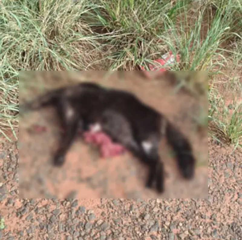 Gato estava sem a cabeça e coração. Vísceras também foram retiradas. FOTO: Divulgação Tatiane Lopes