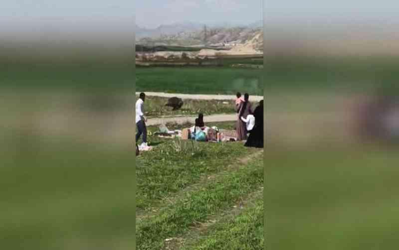 Público fica indignado após javali ser morto durante piquenique do festival Noruz, no Curdistão