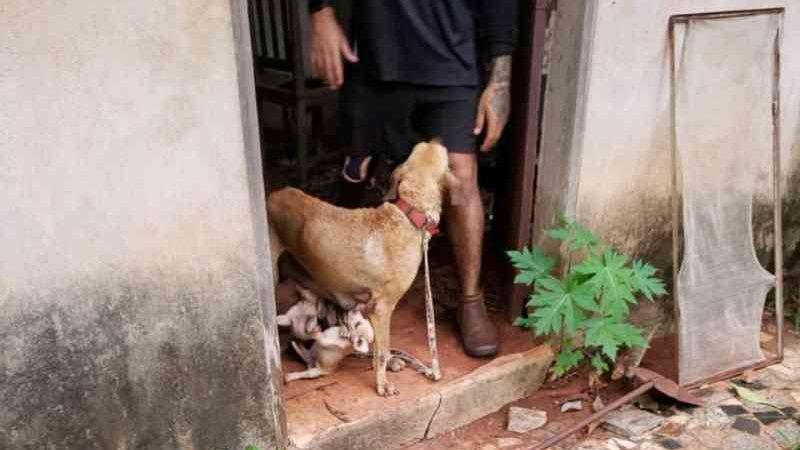 Cadela vítima de maus-tratos é resgatada após ser separada de filhotes e ficar uivando em portão