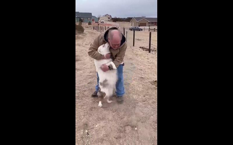 Cadela cega e surda reconhece tutor após 1 ano afastados devido à pandemia