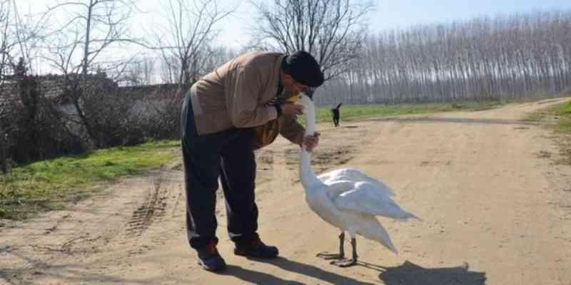 Carteiro e cisne são melhores amigos há quase 40 anos