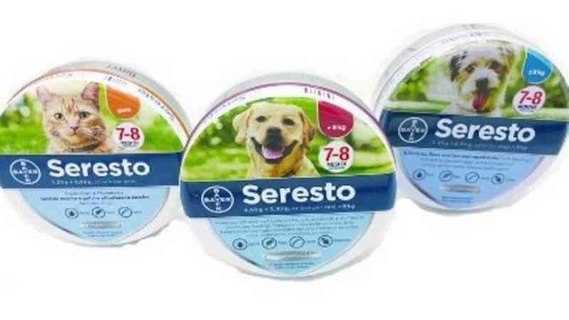 Coleira vendida no Brasil está por trás da morte de quase 1.700 cães e gatos nos EUA, diz relatório