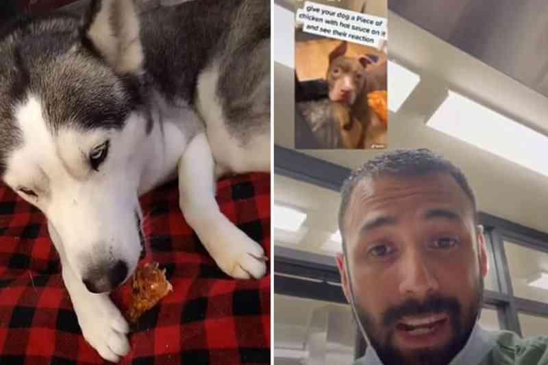 Tutores dão molhos apimentados para seus cães, postam vídeos e enfurecem veterinários
