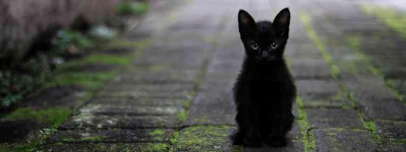 """""""Estrangulador"""" de gatos condenado a seis meses de prisão"""