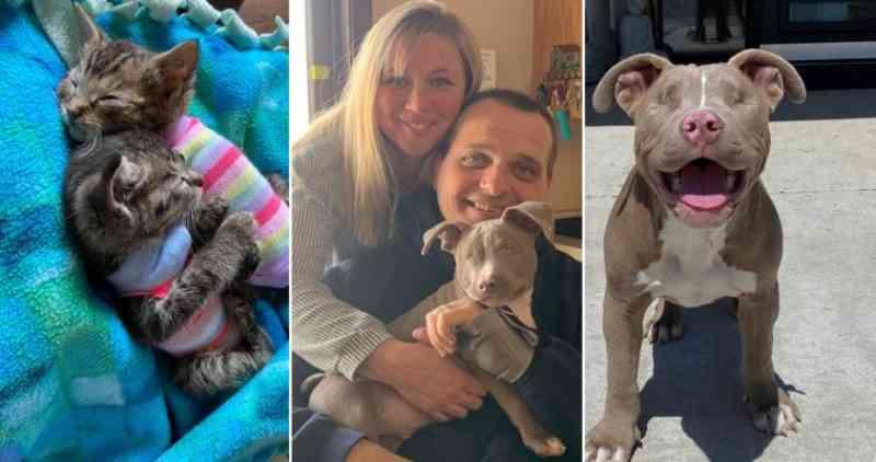 Mulher transforma casa em santuário para 26 animais deficientes adotados