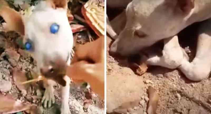 Mulher resgata cão quase cego abandonado no meio do nada: 'Ele quase desistiu de viver'