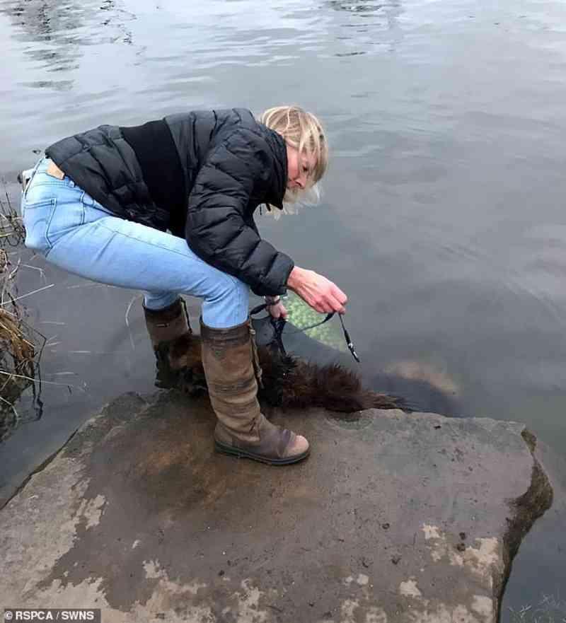 Cachorra que lutou por horas após ser amarrada a pedra e jogada em rio procura um novo lar