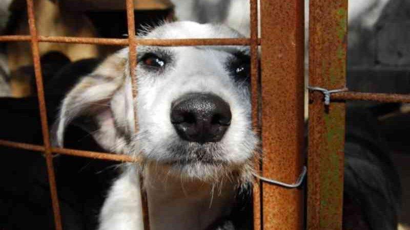 Assembleia Legislativa aprova cassação de registro de empresas por maus-tratos a animais na Paraíba