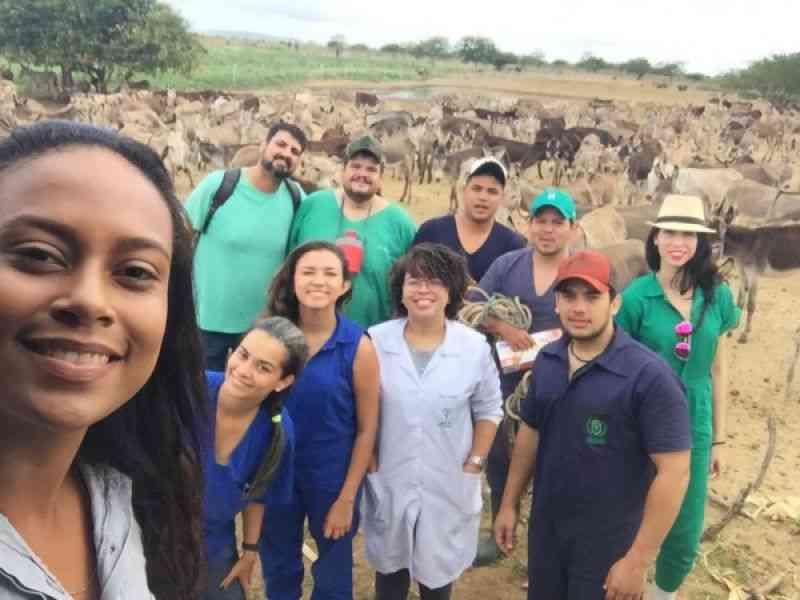 Alunos de Veterinária publicam artigos sobre ação contra abate de jumentos na Bahia