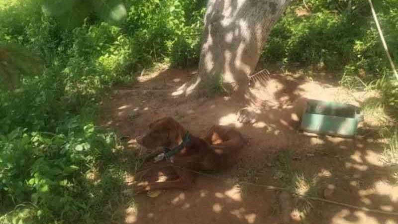Após denúncia de maus-tratos, PM descobre animal morto a golpes de porrete em Alagoas