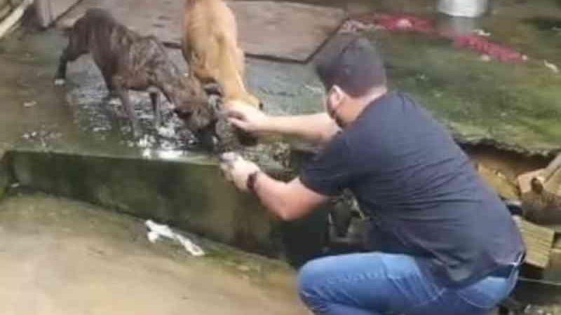 Polícia resgata cães presos em casa sem comida em Laranjal do Jari, AP; tutora é procurada