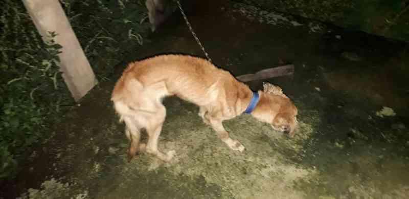 Polícia responsabiliza mulher por maus-tratos a cães no Amapá; um deles morreu por desnutrição