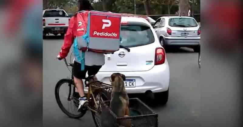 Esse entregador argentino adaptou bicicleta para não deixar seu cãozinho sozinho; vídeo