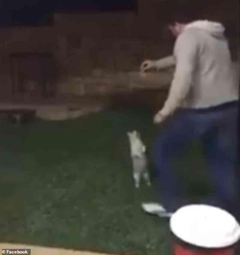 Chocante: homem atrai um gato e o chuta por cima de uma cerca; polícia australiana indicia agressor