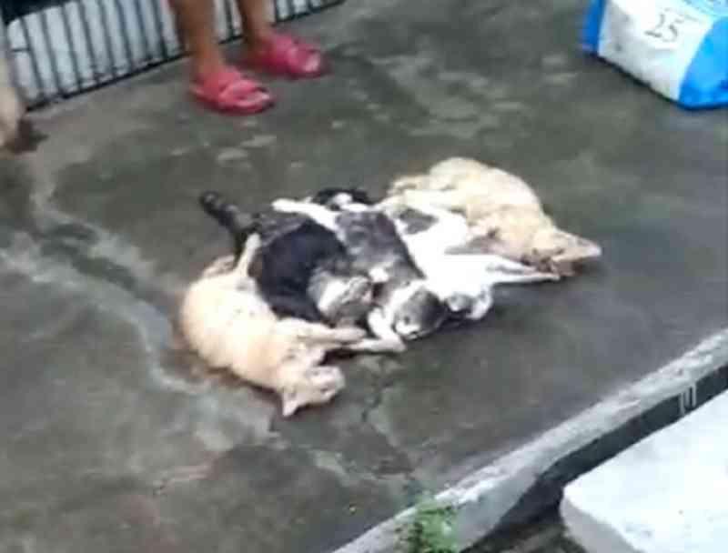 Gatos são encontrados mortos em Cruz das Almas (BA) um dos animais aparece agonizando