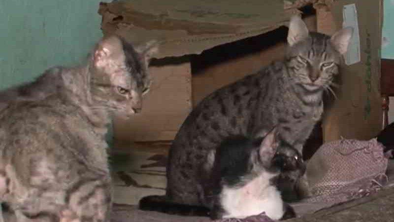 Moradora de Feira de Santana (BA) cuida de mais de 70 animais vítimas de maus-tratos e pede doações; conheça