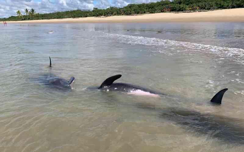 Quatro golfinhos são encontrados encalhados na orla de Porto Seguro, BA
