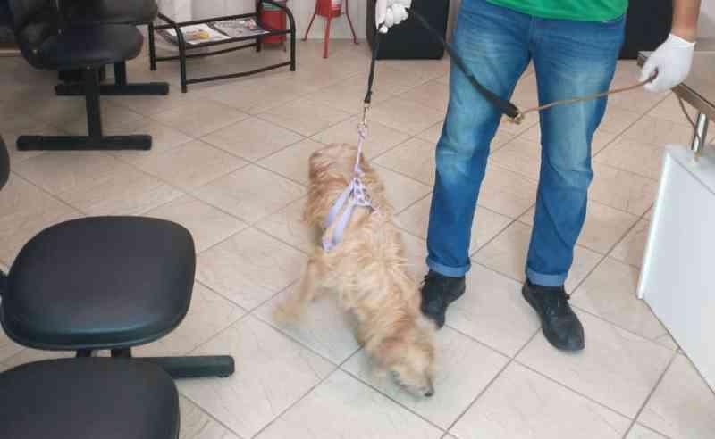 Cachorro que teve órgão genital cortado é resgatado na praia de Ondina, em Salvador, BA